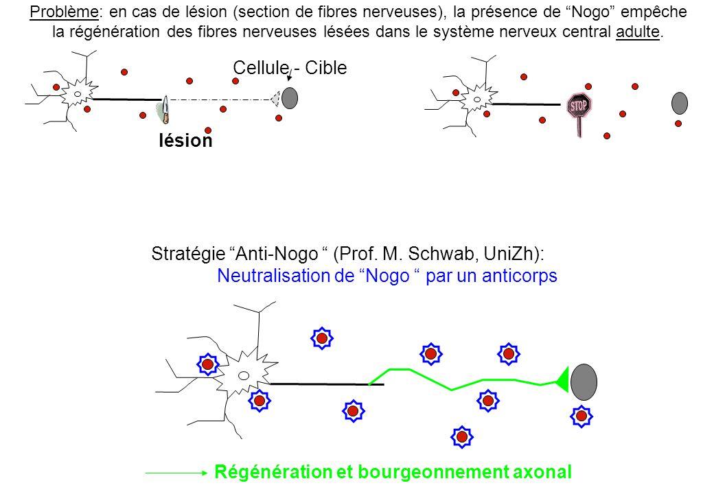 Stratégie Anti-Nogo (Prof. M. Schwab, UniZh):