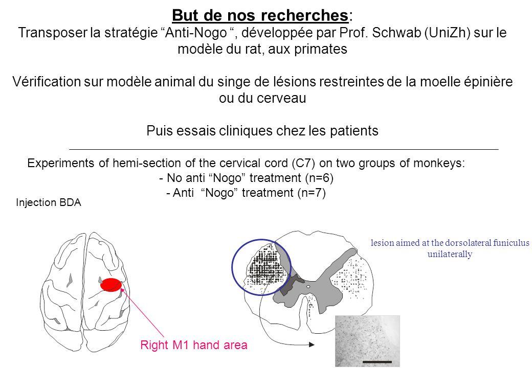 But de nos recherches: Transposer la stratégie Anti-Nogo , développée par Prof. Schwab (UniZh) sur le modèle du rat, aux primates.