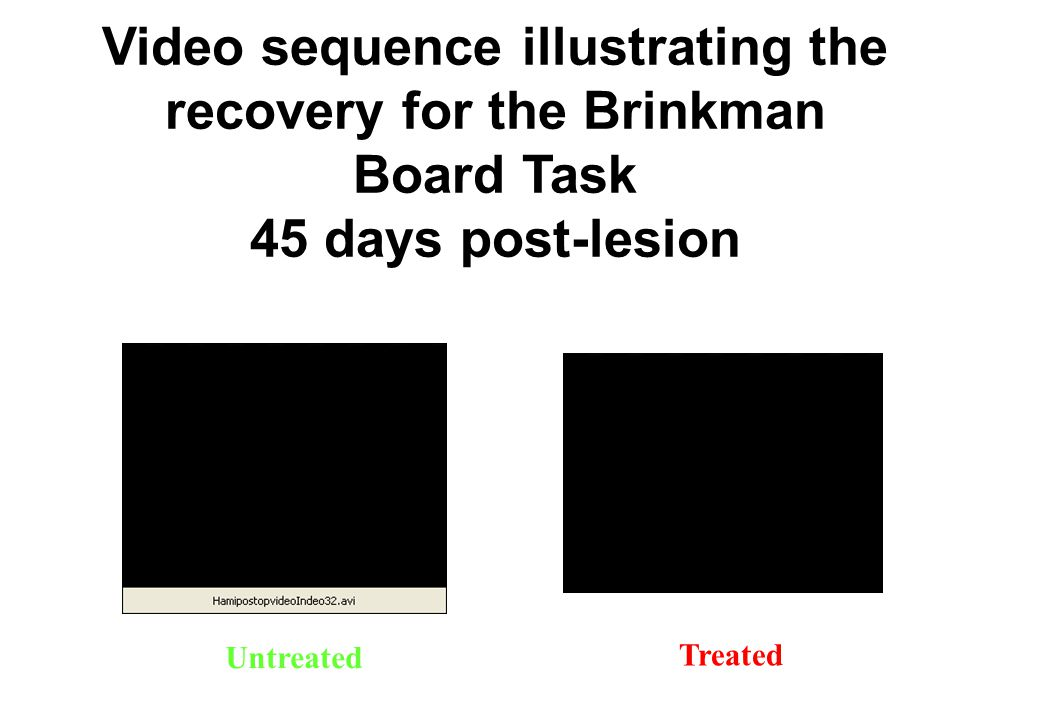 Video sequence illustrating the recovery for the Brinkman Board Task 45 days post-lesion