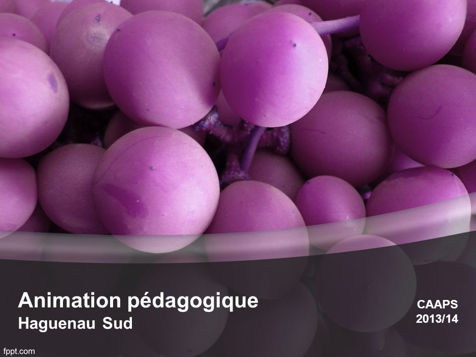 Animation pédagogique Haguenau Sud