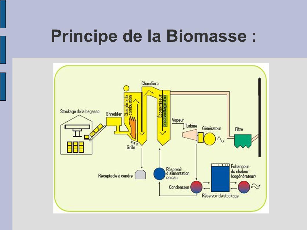 Principe de la Biomasse :