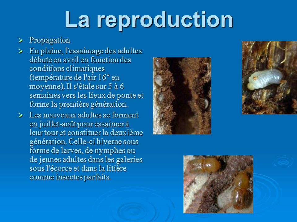 La reproduction Propagation