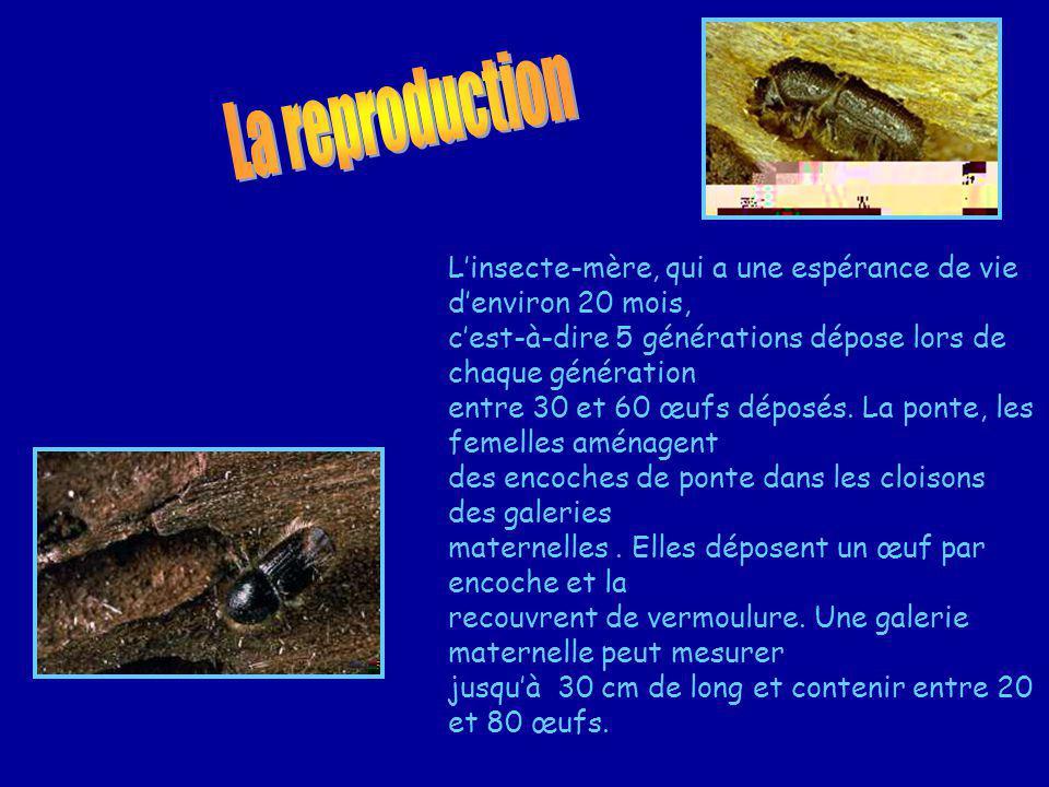 La reproduction L'insecte-mère, qui a une espérance de vie d'environ 20 mois, c'est-à-dire 5 générations dépose lors de chaque génération.