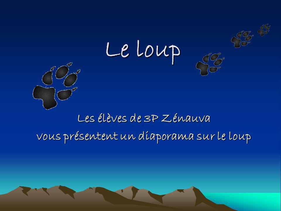 Les élèves de 3P Zénauva vous présentent un diaporama sur le loup