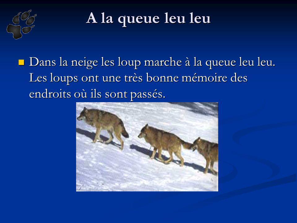 A la queue leu leu Dans la neige les loup marche à la queue leu leu.