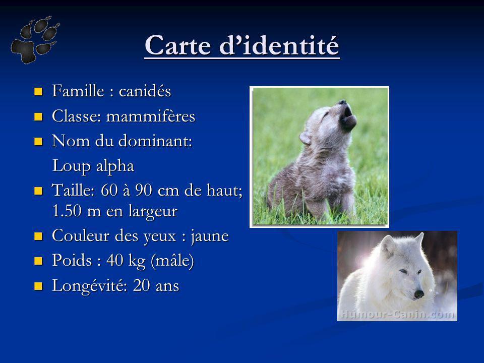 Carte d'identité Famille : canidés Classe: mammifères Nom du dominant: