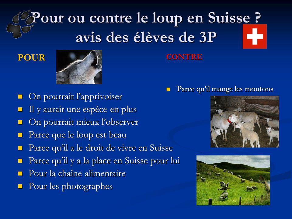 Pour ou contre le loup en Suisse avis des élèves de 3P