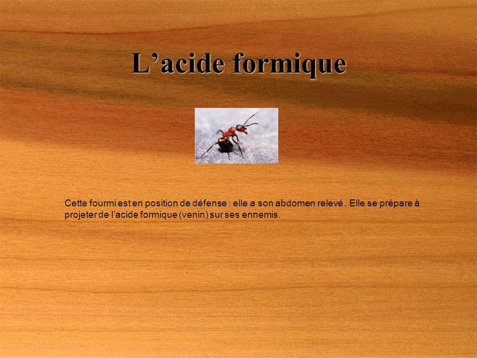 L'acide formique