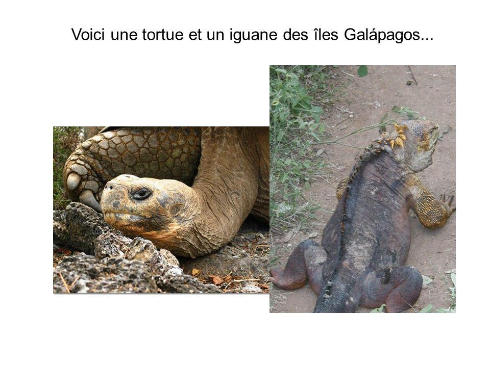 Voici une tortue et un iguane des îles Galápagos...