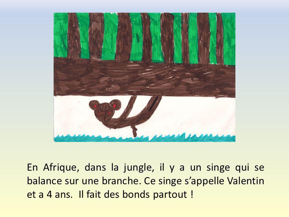 En Afrique, dans la jungle, il y a un singe qui se balance sur une branche.