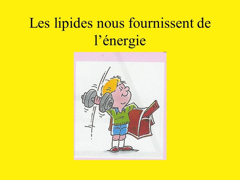 Les lipides nous fournissent de l'énergie