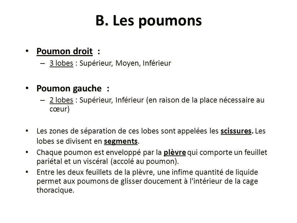 B. Les poumons Poumon droit : Poumon gauche :
