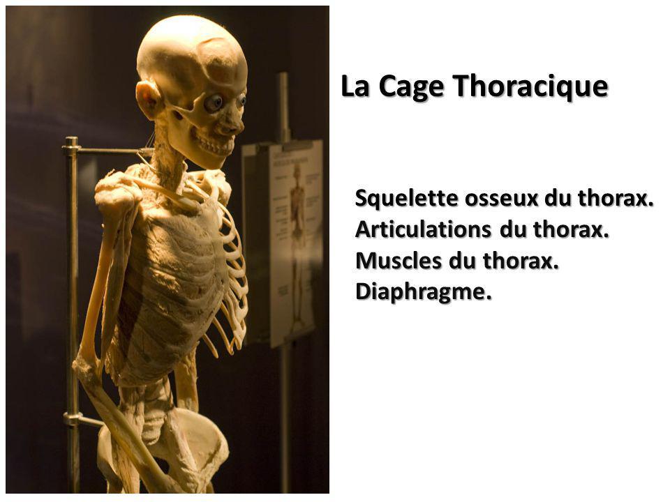 La Cage Thoracique Squelette osseux du thorax. Articulations du thorax.
