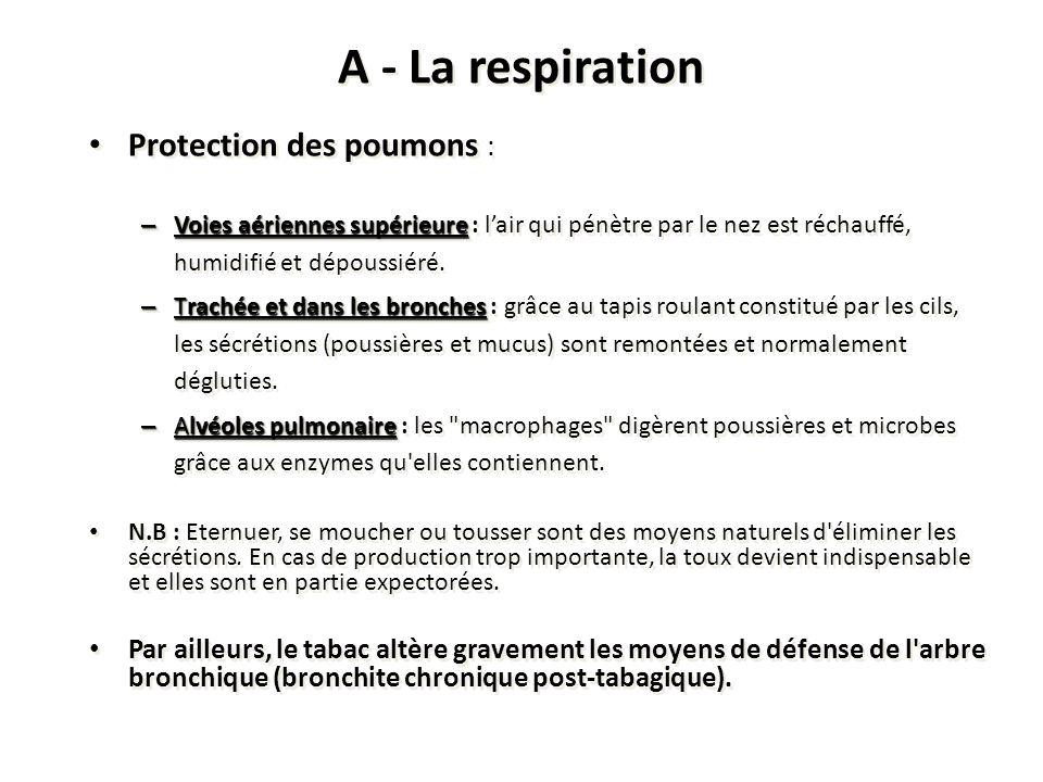 A - La respiration Protection des poumons :