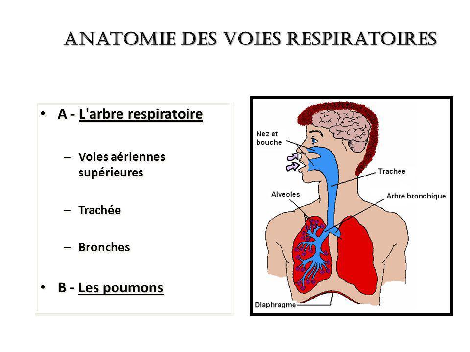 Anatomie des Voies Respiratoires
