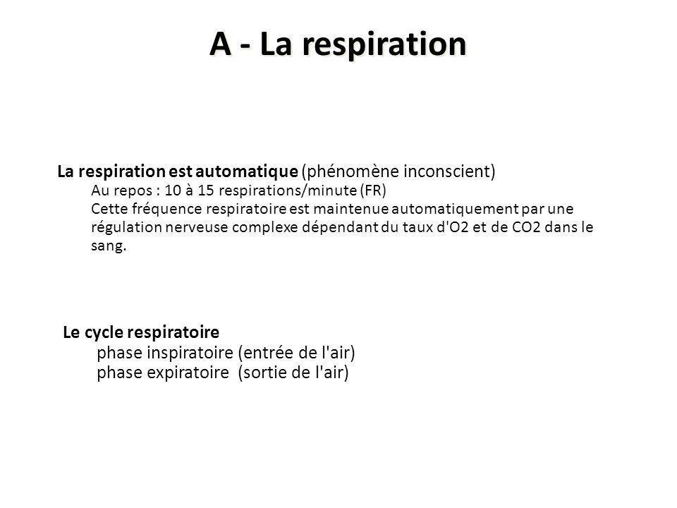 A - La respiration La respiration est automatique (phénomène inconscient) Au repos : 10 à 15 respirations/minute (FR)