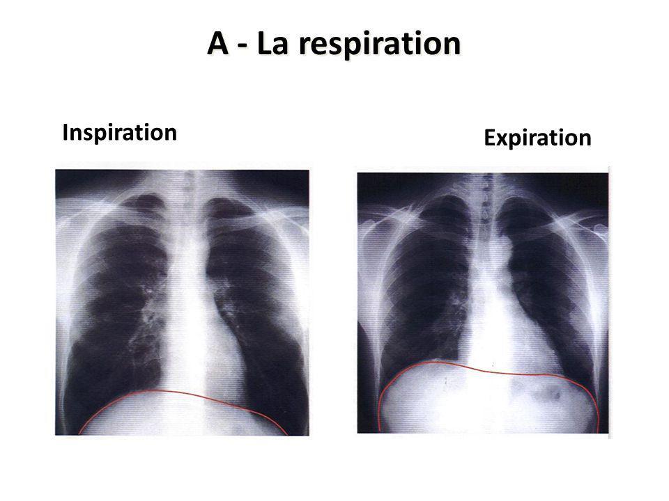 A - La respiration Inspiration Expiration