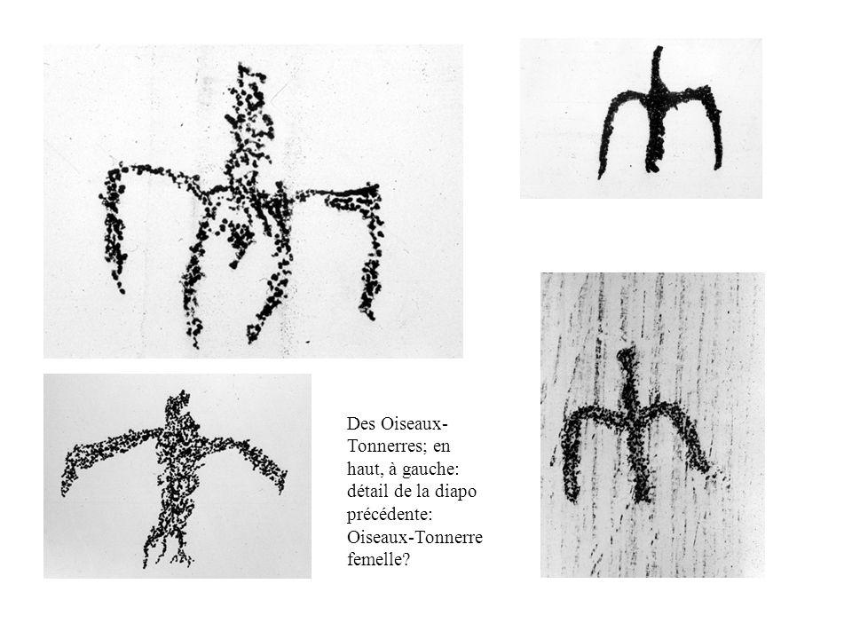 Des Oiseaux-Tonnerres; en haut, à gauche: détail de la diapo précédente: Oiseaux-Tonnerre femelle