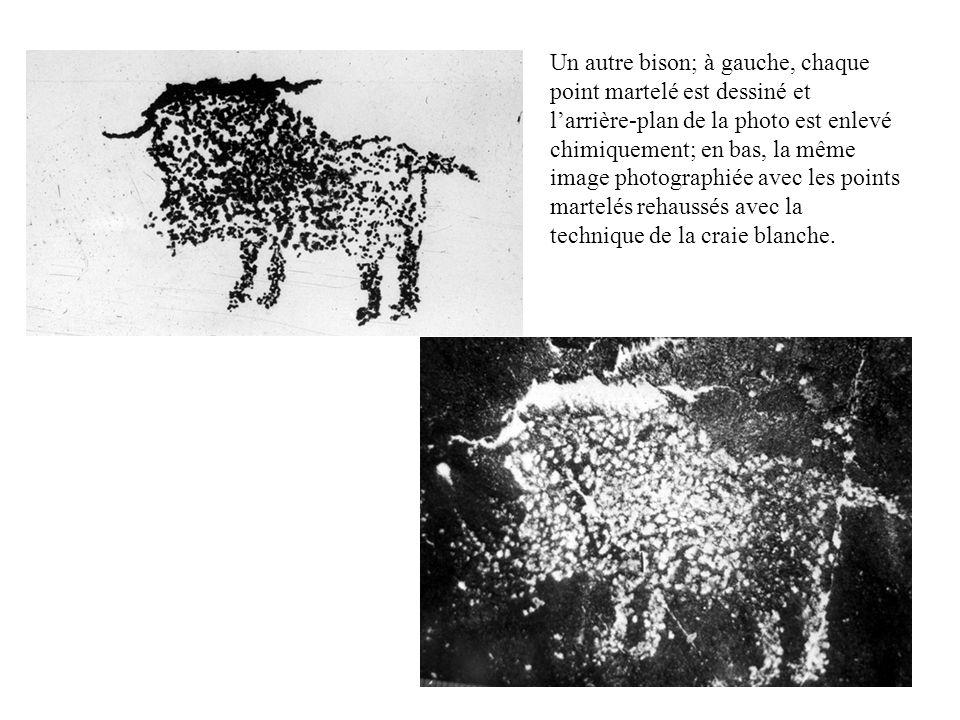 Un autre bison; à gauche, chaque point martelé est dessiné et l'arrière-plan de la photo est enlevé chimiquement; en bas, la même image photographiée avec les points martelés rehaussés avec la technique de la craie blanche.