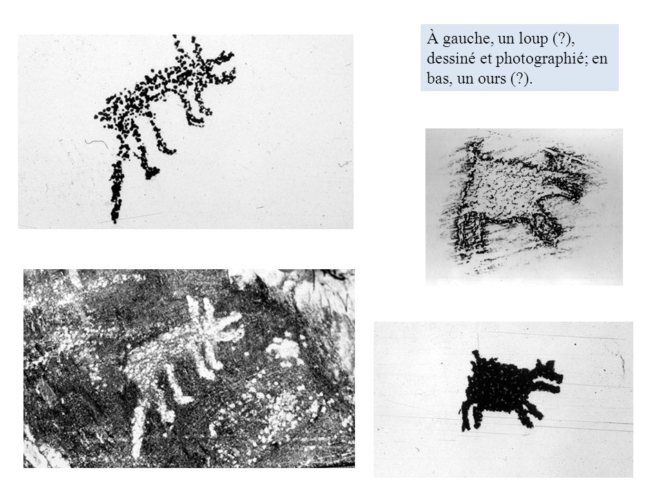 À gauche, un loup ( ), dessiné et photographié; en bas, un ours ( ).