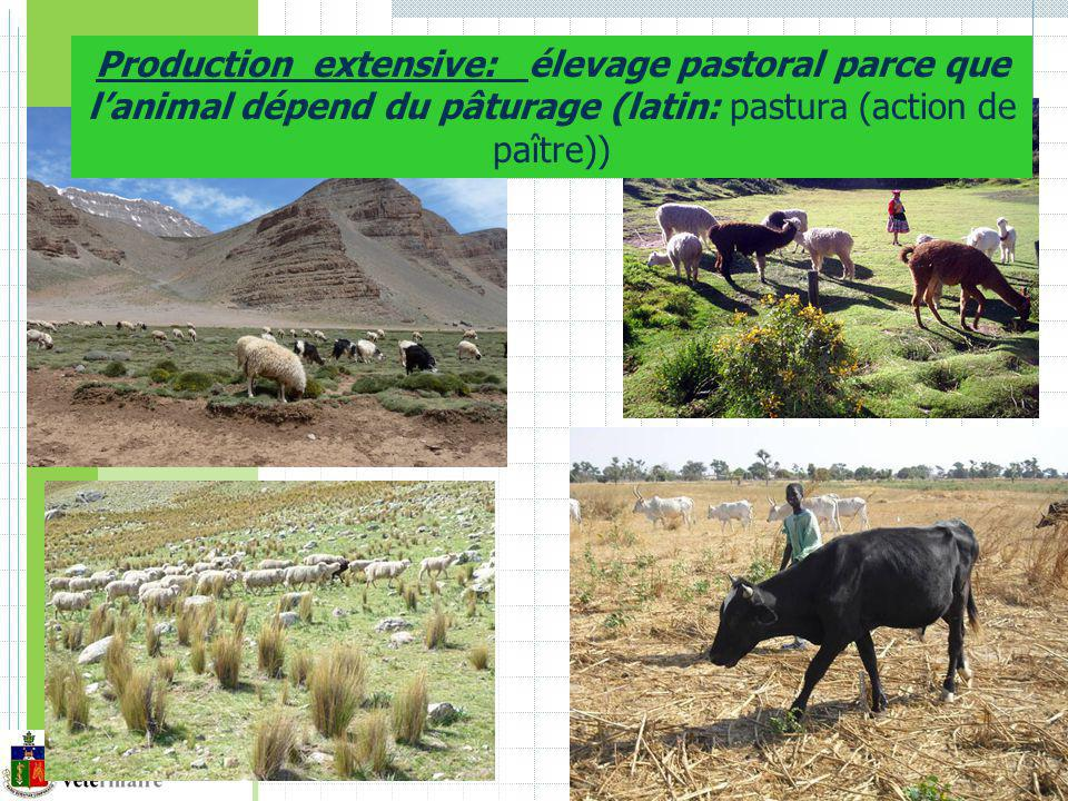 Production extensive: élevage pastoral parce que l'animal dépend du pâturage (latin: pastura (action de paître))
