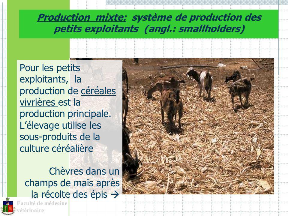 Production mixte: système de production des petits exploitants (angl