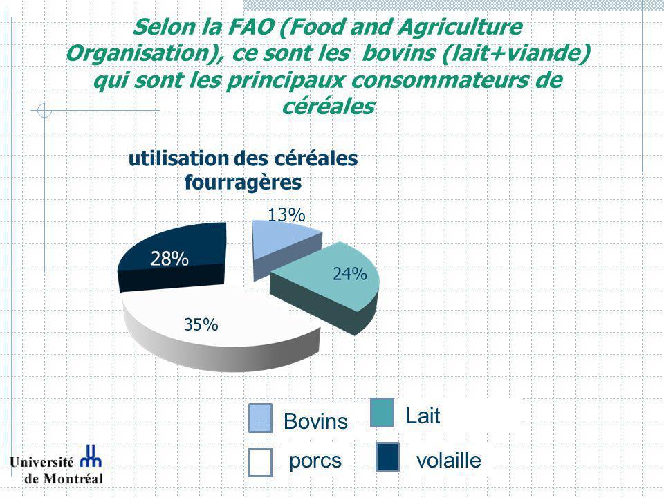 Selon la FAO (Food and Agriculture Organisation), ce sont les bovins (lait+viande) qui sont les principaux consommateurs de céréales