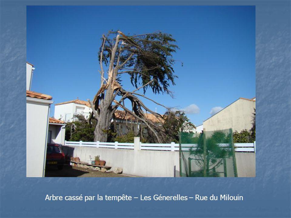 Arbre cassé par la tempête – Les Génerelles – Rue du Milouin