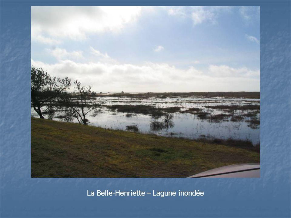 La Belle-Henriette – Lagune inondée