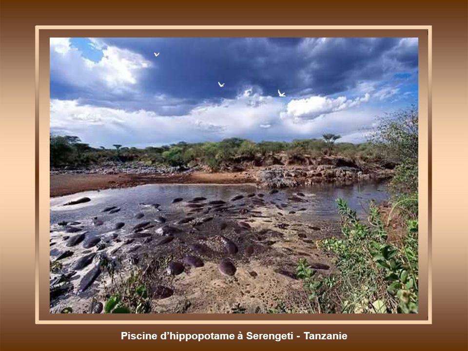 Piscine d'hippopotame à Serengeti - Tanzanie