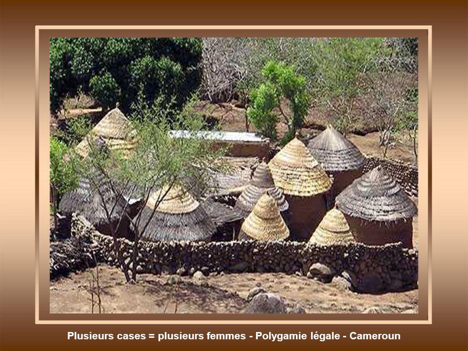 Plusieurs cases = plusieurs femmes - Polygamie légale - Cameroun
