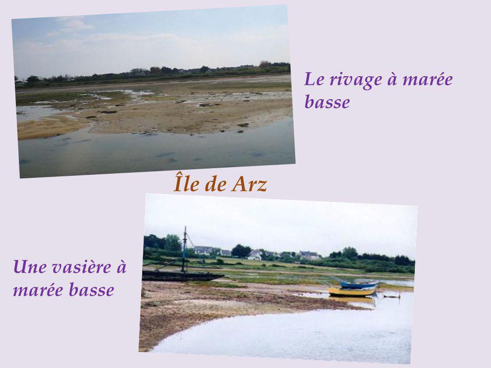 Le rivage à marée basse Île de Arz Une vasière à marée basse