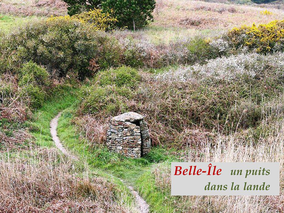 Belle-Île un puits . dans la lande