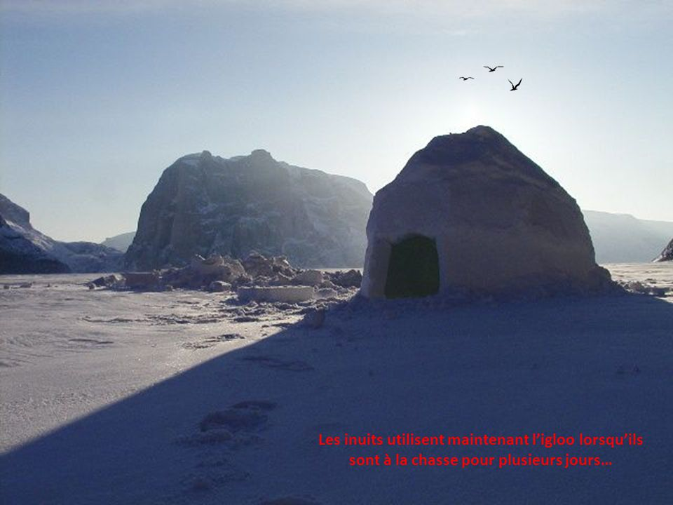 Les inuits utilisent maintenant l'igloo lorsqu'ils sont à la chasse pour plusieurs jours…
