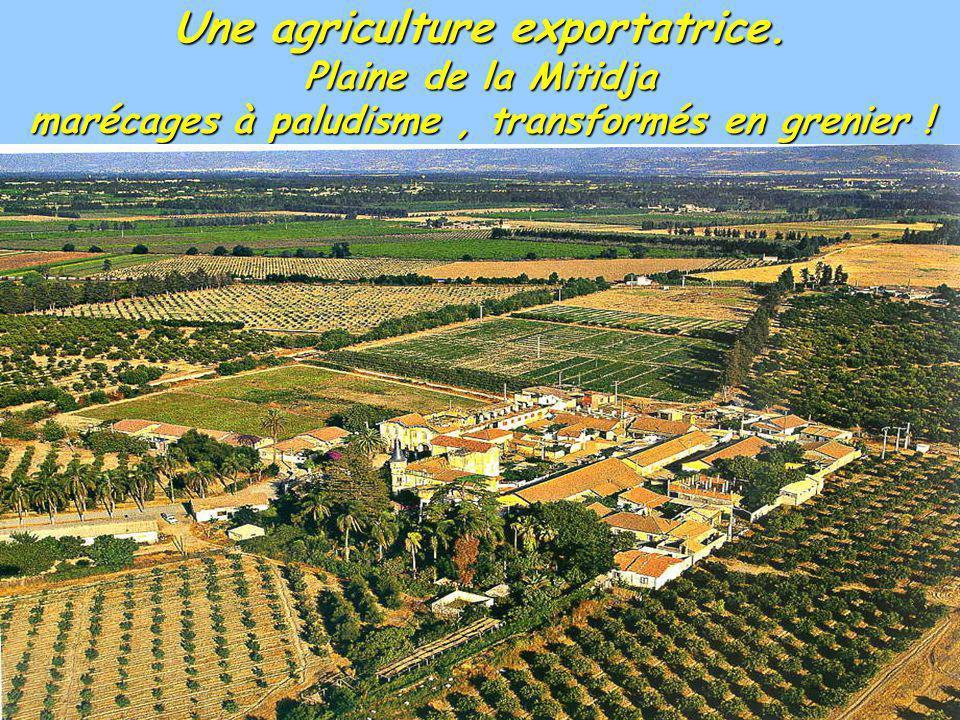 Une agriculture exportatrice