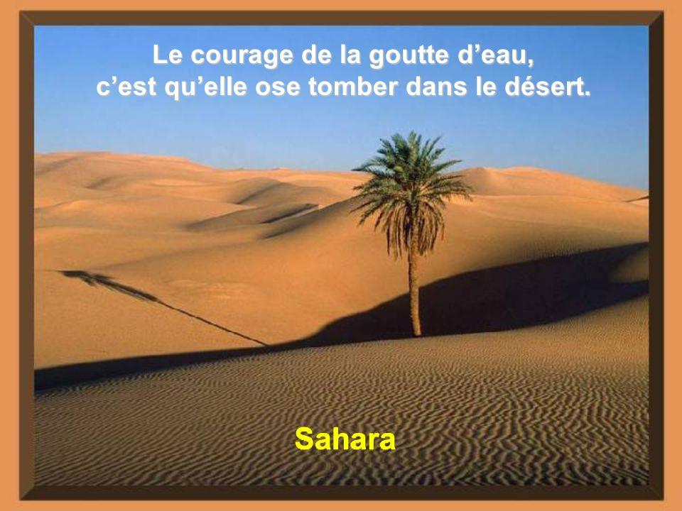 Sahara Le courage de la goutte d'eau,