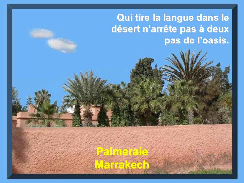 Qui tire la langue dans le désert n'arrête pas à deux pas de l'oasis.