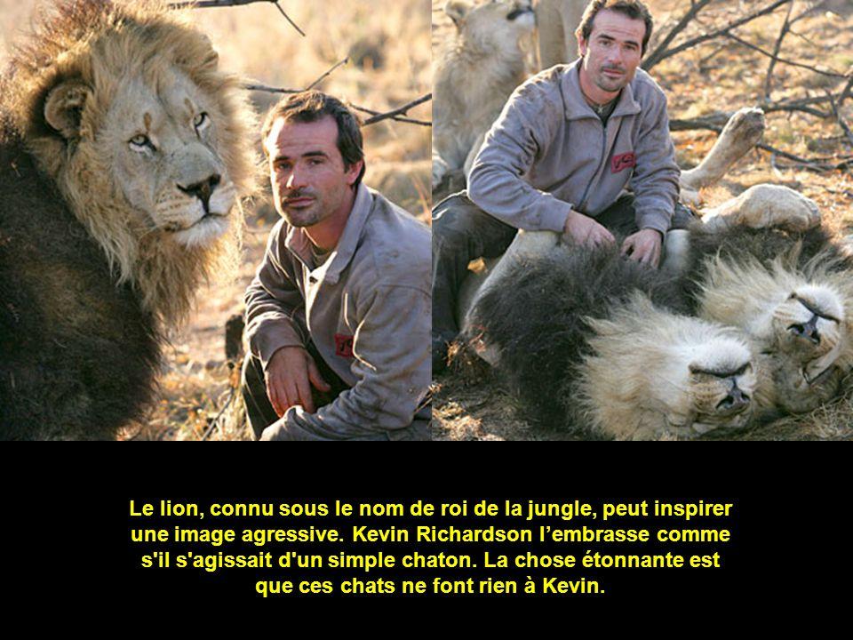 Le lion, connu sous le nom de roi de la jungle, peut inspirer une image agressive.