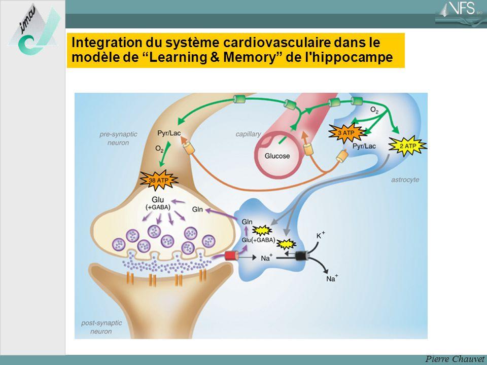 Integration du système cardiovasculaire dans le modèle de Learning & Memory de l hippocampe