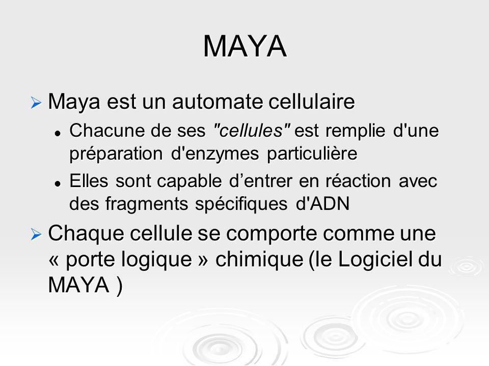 MAYA Maya est un automate cellulaire