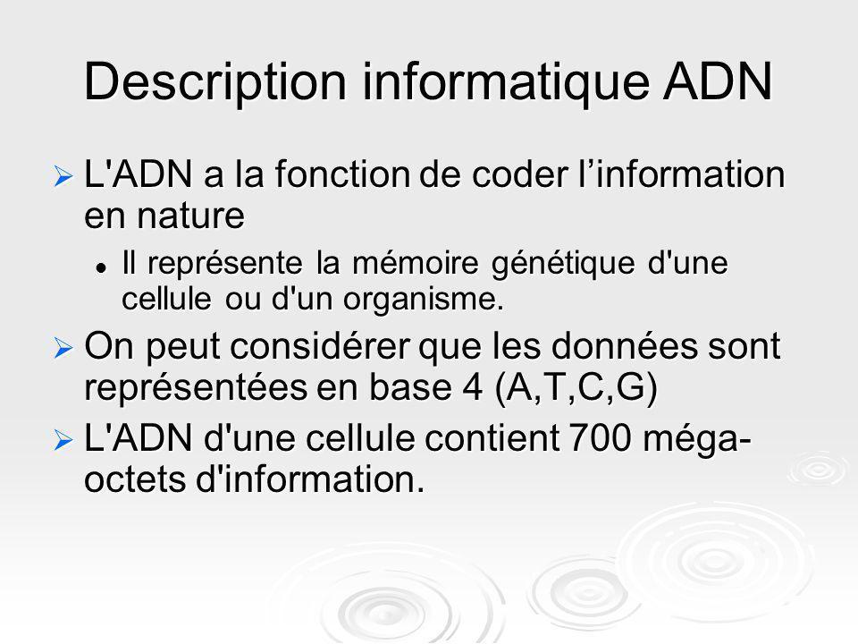 Description informatique ADN