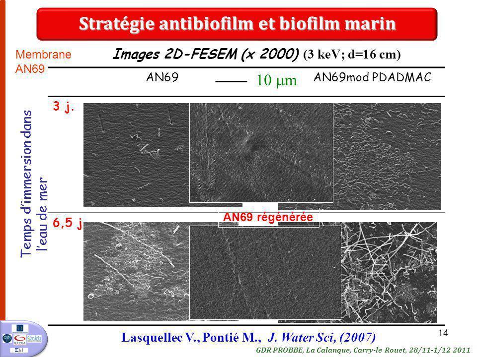 Stratégie antibiofilm et biofilm marin