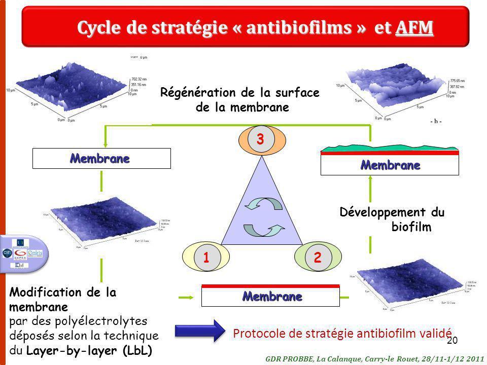 Cycle de stratégie « antibiofilms » et AFM Régénération de la surface
