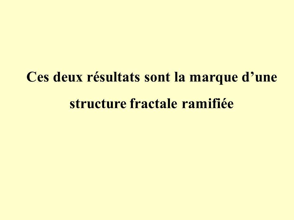 Ces deux résultats sont la marque d'une structure fractale ramifiée