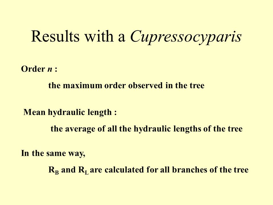 Results with a Cupressocyparis