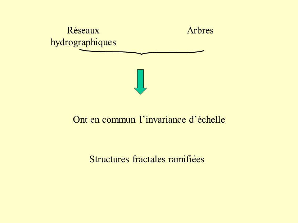 Réseaux hydrographiques Arbres