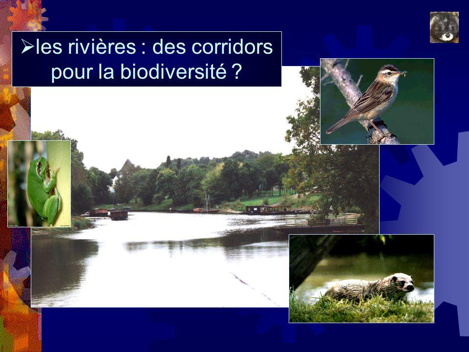 les rivières : des corridors pour la biodiversité