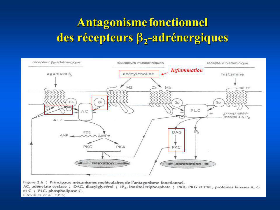 Antagonisme fonctionnel des récepteurs 2-adrénergiques