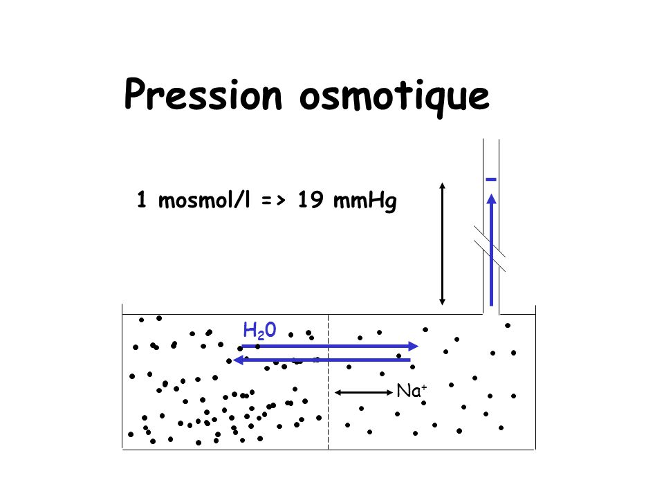 Pression osmotique 1 mosmol/l => 19 mmHg H20 Na+