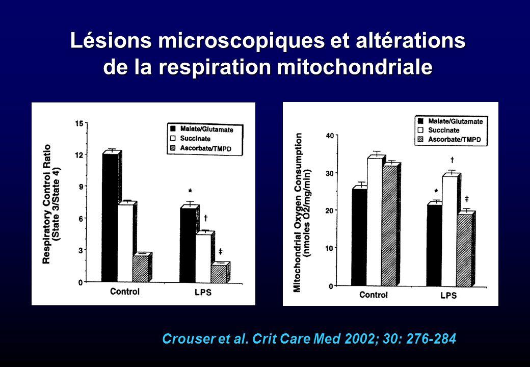 Lésions microscopiques et altérations de la respiration mitochondriale